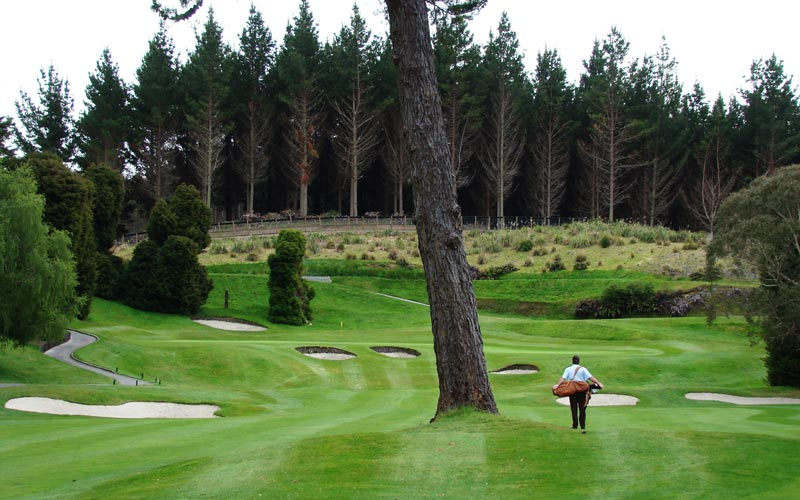 This enormous pine in the middle of the fourteenth fairway has been a controversial feature ever since the course opened. Given that it is limbed up so high today, there is no reason for golfers to continue to think ill of this central hazard.