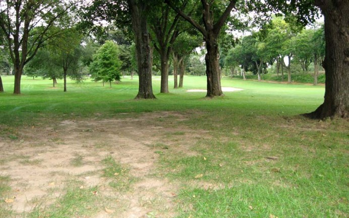 ...2) typical  turf  conditions between the ninth and seventh fairways.  Note ahead that further tree-planting continues unabated.