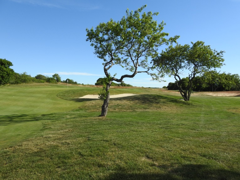 The 5th hole approach requires navigating ancient cherry trees as well as a complex green.
